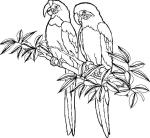 Parrot Animal Coloring Pages