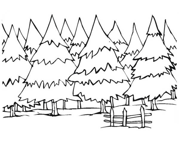 Pine Forest Coloring Pages Pics Download