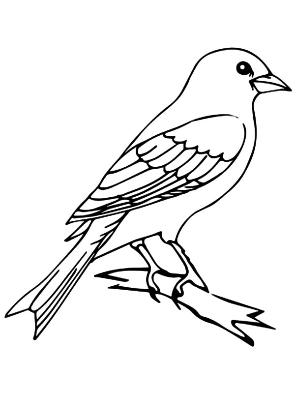 M Is For Mockingbird Coloring Pages
