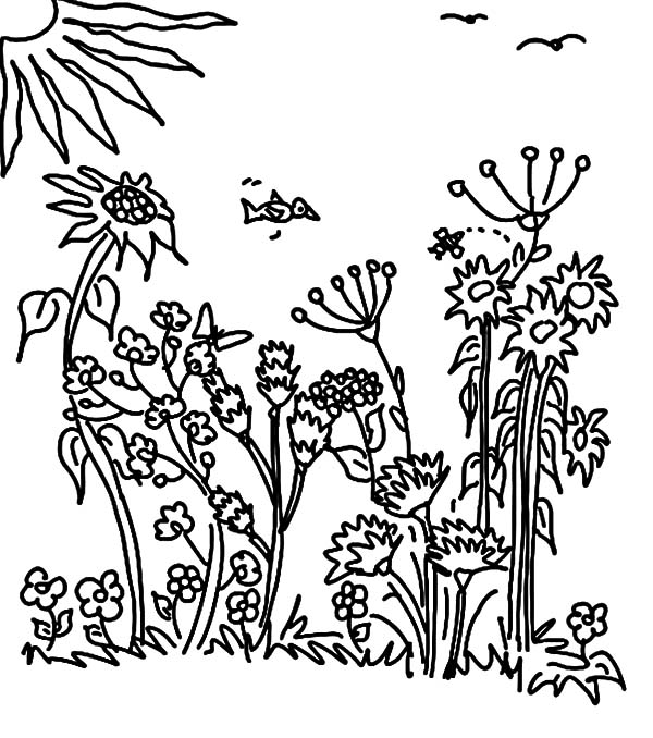 Watching Sunrise in My Garden Coloring Pages Color Luna