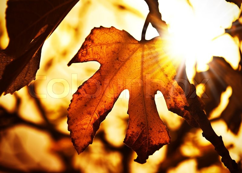 Tree With Leaves Falling Wallpaper Grunge Autumn Dark Background With Dry Maple Leaves And