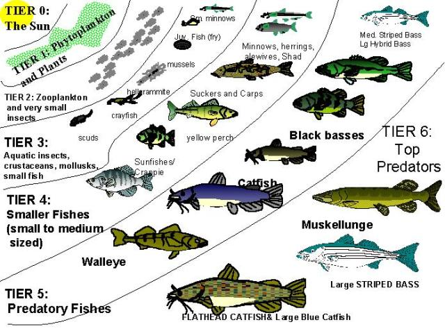 Ecology of Lakes and Ponds for Anglers