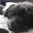 Tessa - Jake's Wish Dog Rescue