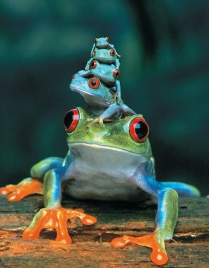 Frog Stack