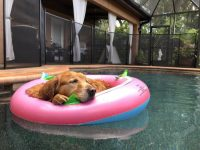 floating pool dog