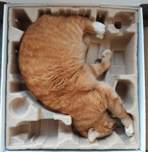 Cat fits packaging perfectly.