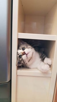 shelf kitty