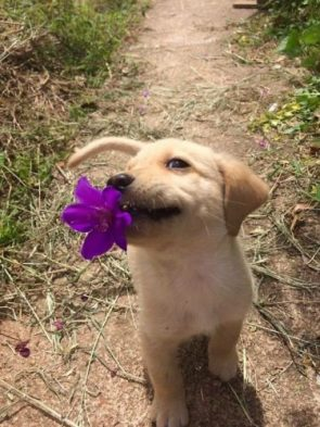 Cutie with a flower