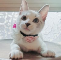 adorable white kitten