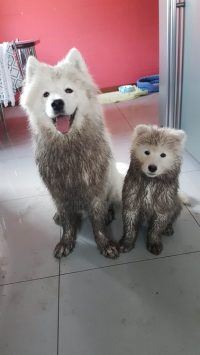 muddy puppies