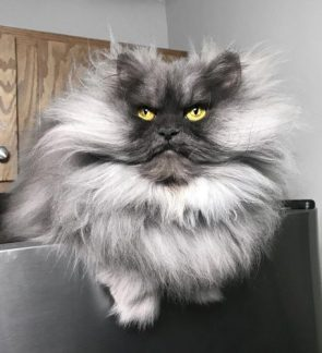 He is essentially the George Clooney of cats.