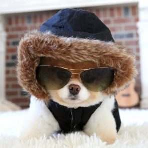 Cool Doggy