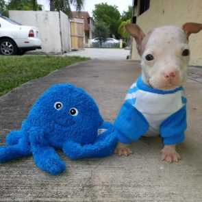 blue octodog