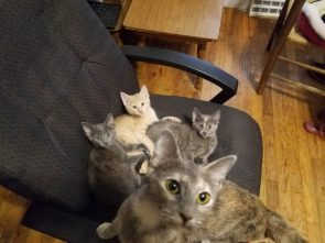 chair full of cats