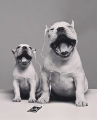 ear bud puppers
