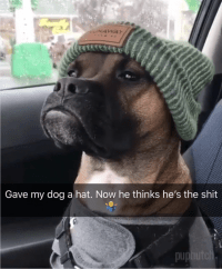gave my dog a hat