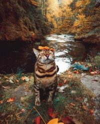 river leaf cat