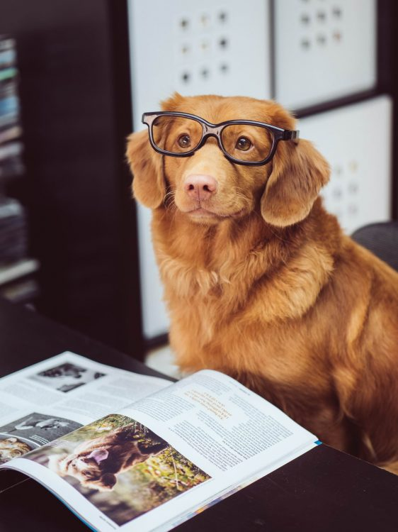 smart puppers