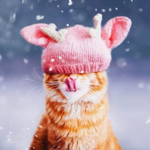 snow cat cap