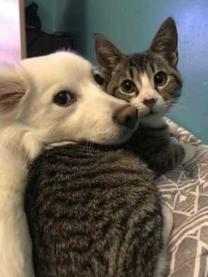 dog and cat cuddlers
