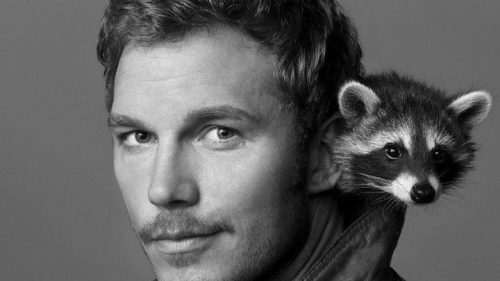 Oreo the Raccoon the Model for Rocket in Guardians of the Galaxy Has Passed Away