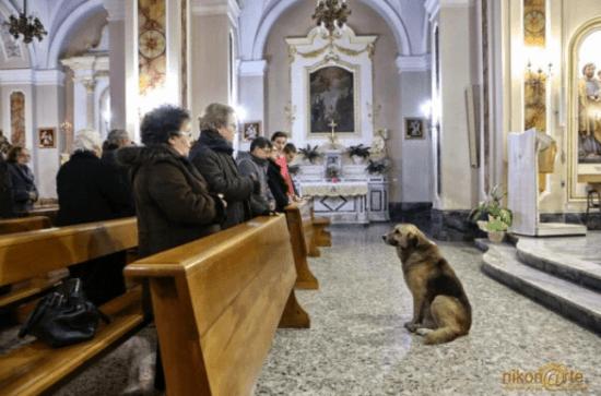 Loyal Dog Ciccio
