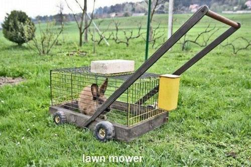 The worlds slowest Lawn Mower