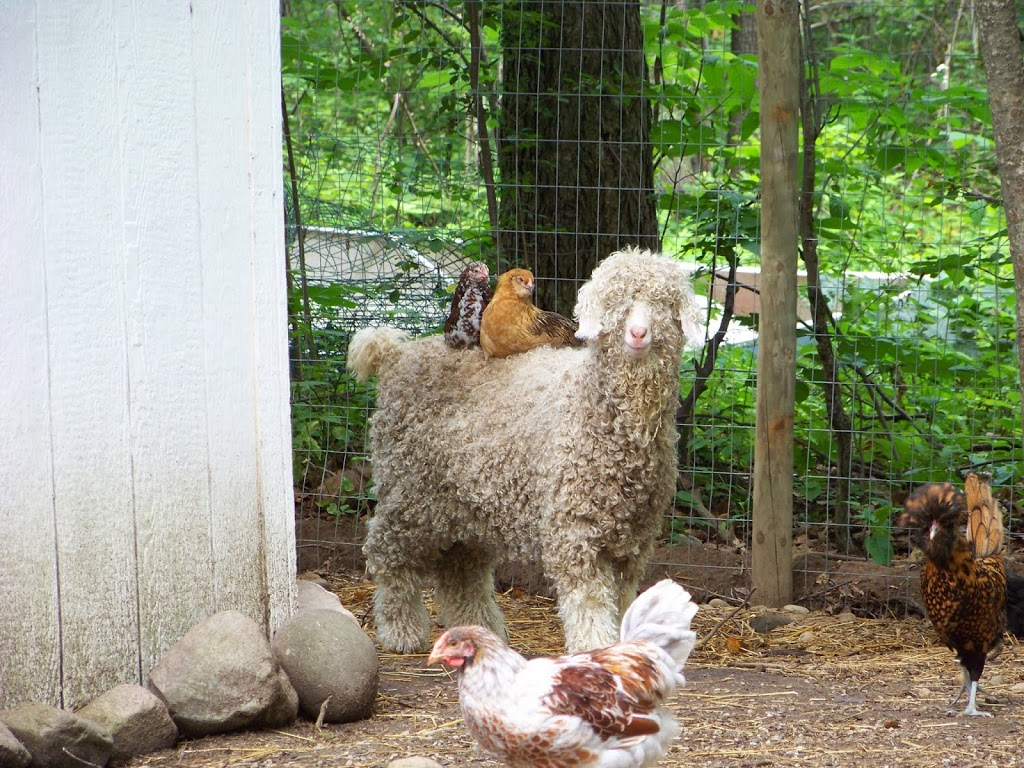 Read This Before You Get Turkey Poults Community Chickens