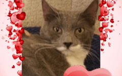CC4C Valentines Day Cats