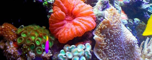 Complete Aquarium   Home