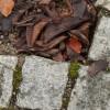 Bricks by iwanna