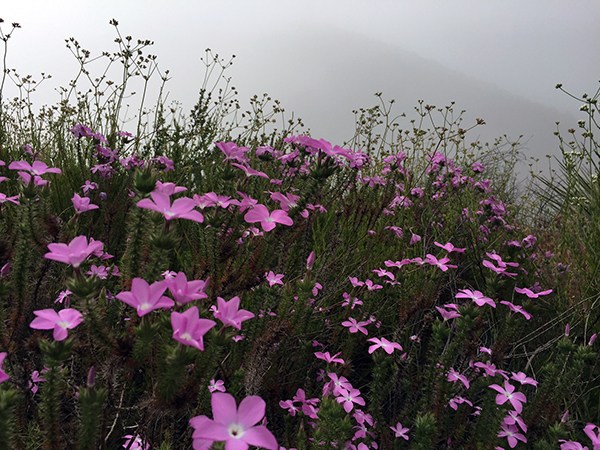 Field of purple wild flowers