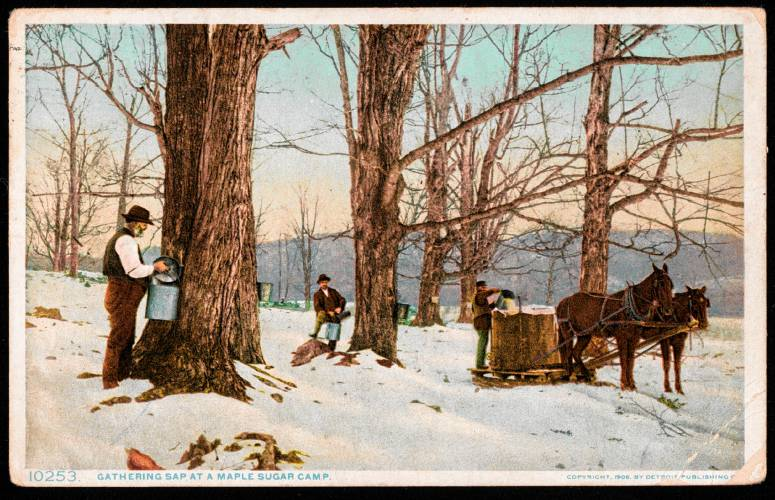 Granite State Stories Dawn Of New Hampshire39s Maple Industry