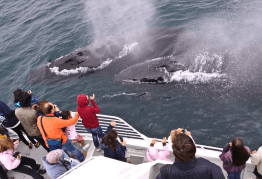 Whale Watching California, Santa Barbara Spring/Summer Island Cruise