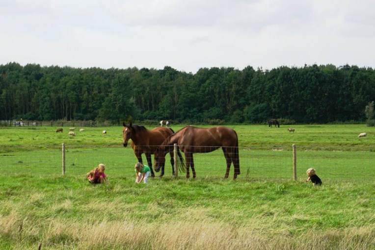 Bermain bersama kuda