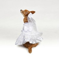 How to Include Your Dog in Your Wedding Day - Confetti.co.uk