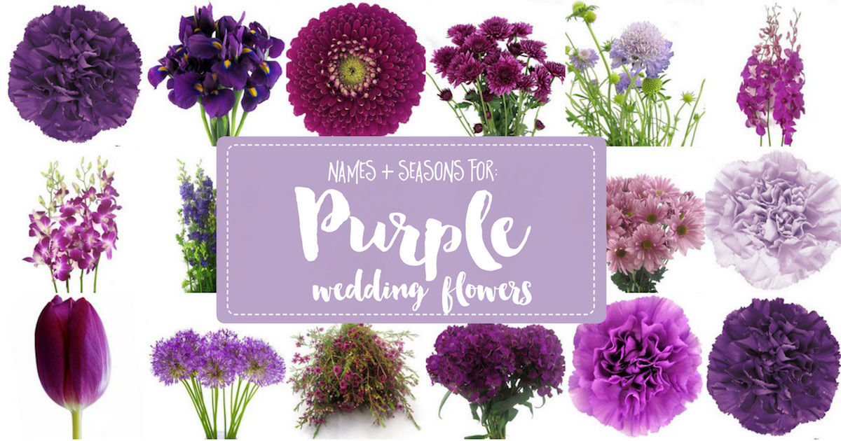 Complete Guide to Purple Wedding Flowers, Purple Flower Names + Pics