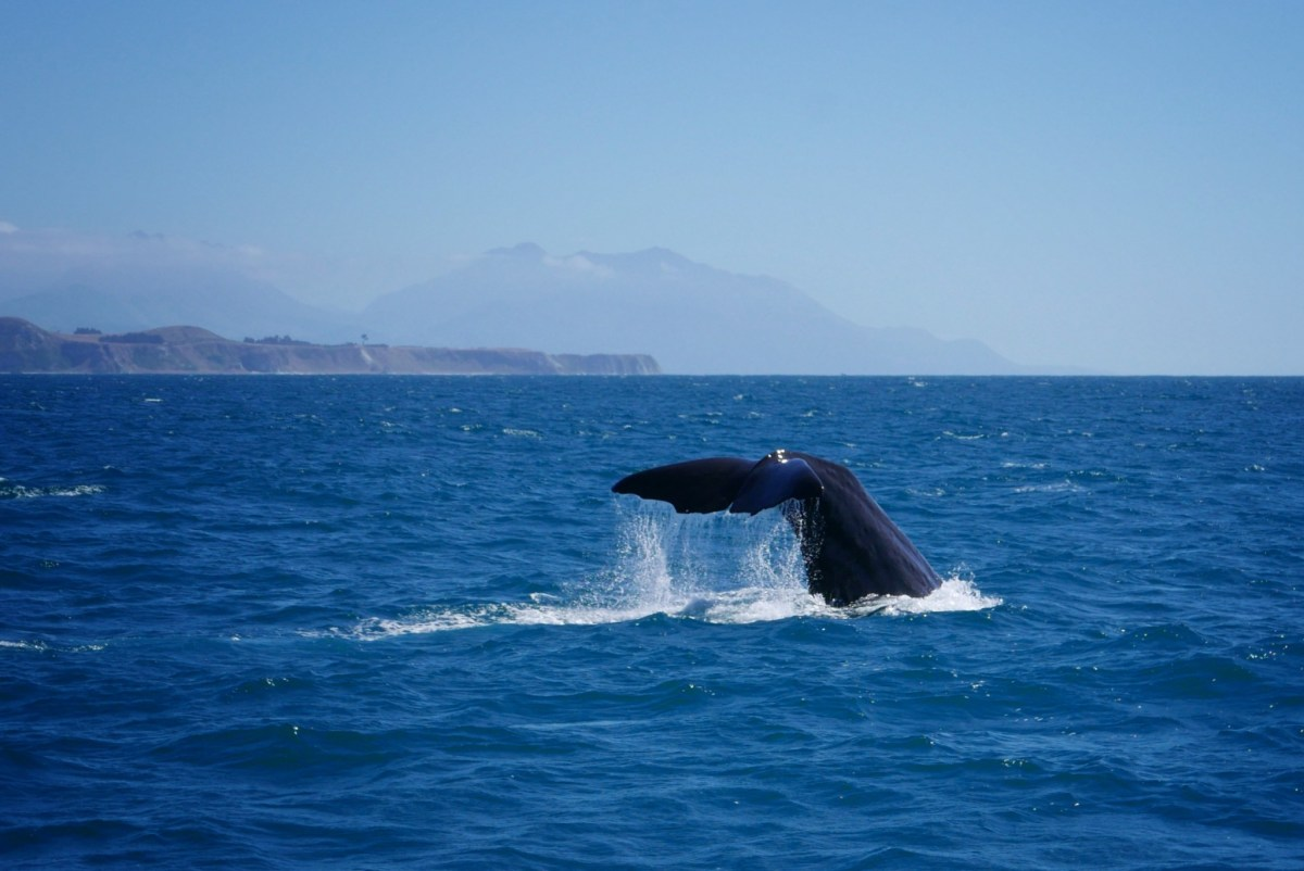 Kaikoura and the Whales