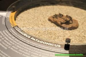 Cucciolo di Massaurus (Triassico)