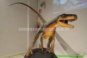 Herrerasaurus ischigualastensis (Triassico)