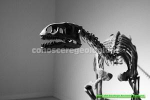 Leonerasaurus taquetrensis,