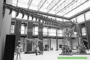Sala del Cretaceo