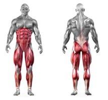 lifts-squat