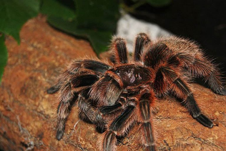10 of the World\u0027s Largest Spiders