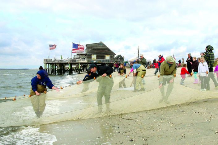 a-seine-net-about-75-feet-long-is-dredged-in-the-bay-and-brought-up-on-the-beach-to-collect-the-species-for-study