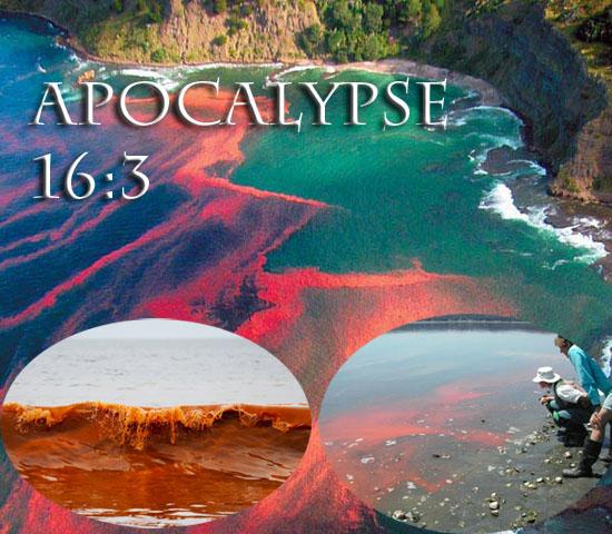 California Red Tide