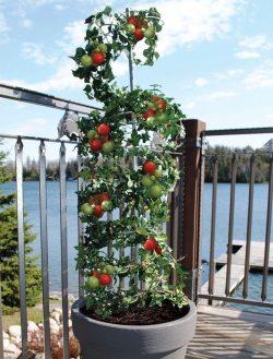 Small Of Vegetable Vertical Garden