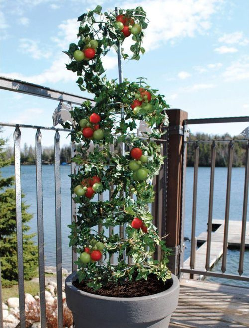 Medium Of Vegetable Vertical Garden