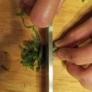 How to Chiffonade Fresh Herbs