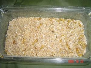Mealworms in Grain